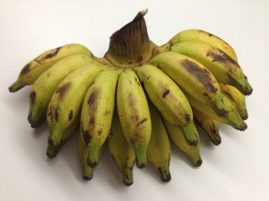 """Indonesian Bananas Each banana is about 2"""" long (the length of an adult thumb)!"""